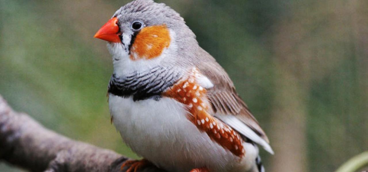 El estrés en los pájaros